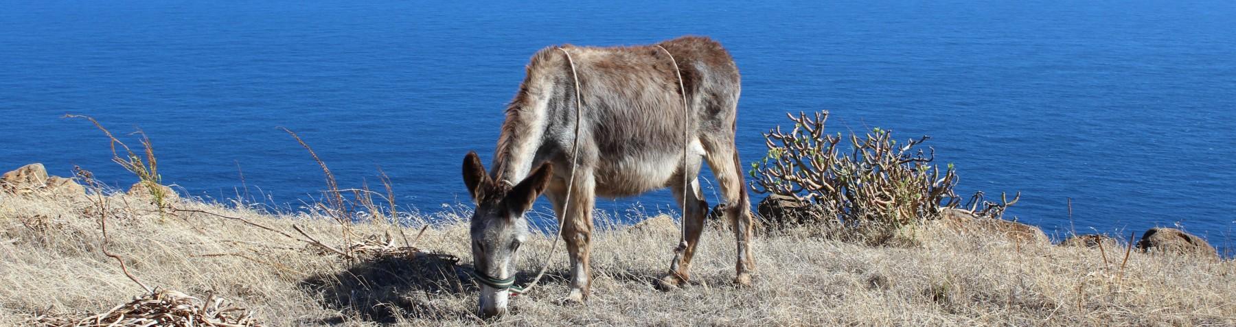 Eselwandern auf La Palma