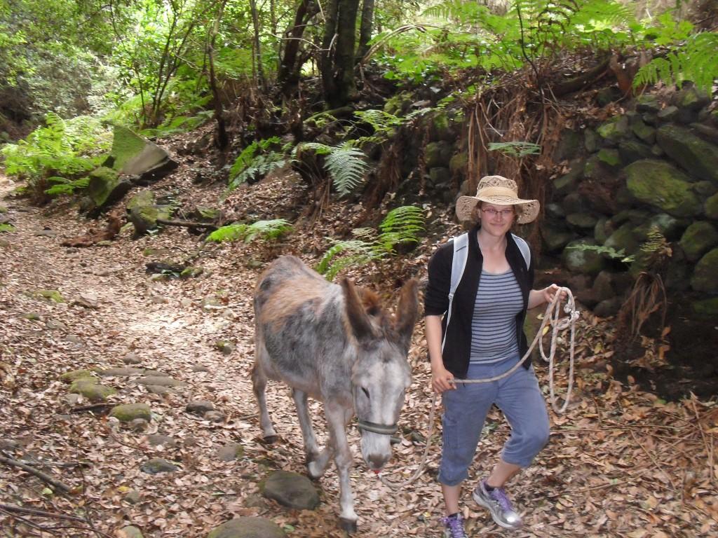 unterwegs mit Esel